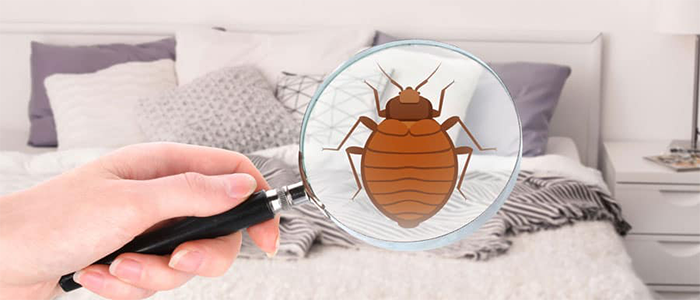 Professional Bed Bug Control Services
