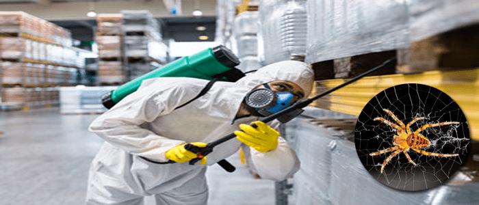 Professionals Spider Control Services